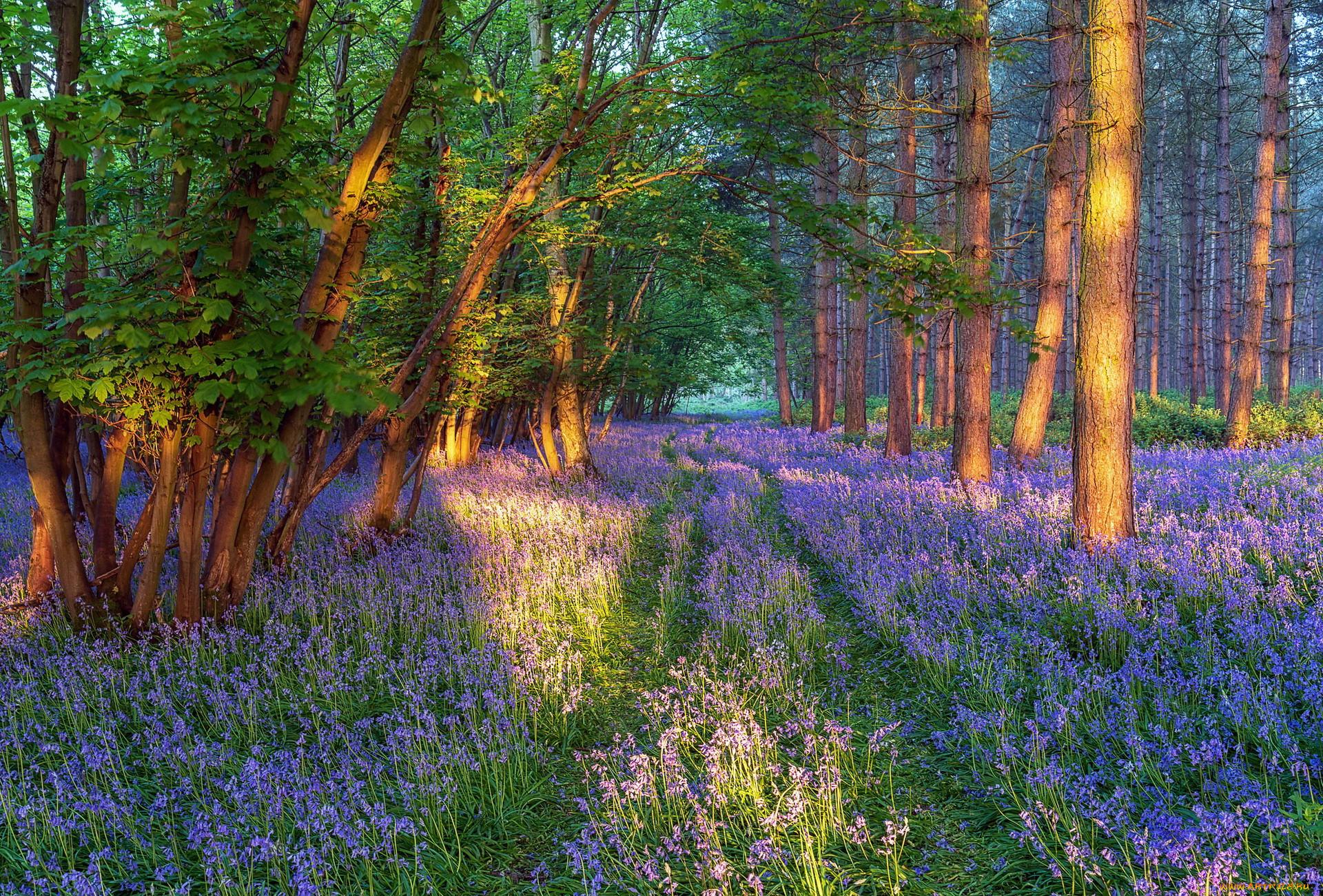 природа, лес, весна, цветы